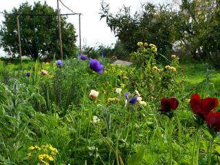 Big garden