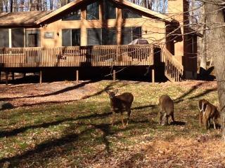The Pine Cone Cabin, Gouldsboro