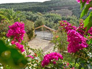 Olive Farm Villa, with private pools, Chania