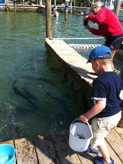 Feed the tarpon at Robbie's, just down the street from Angler's Reef