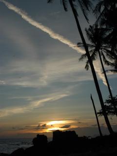 palm sunset-1