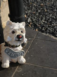 Dogs Welcome! Please check with the owner first.