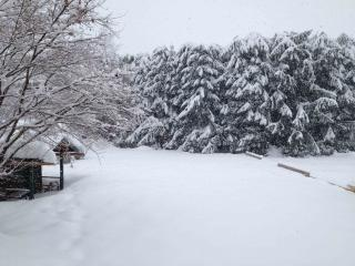 garden view while snowing!