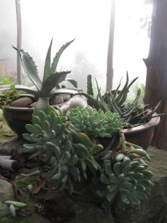 some of the plants all about