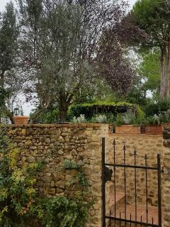 Garden Gate and Rosemary