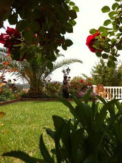 Daisy Villa garden
