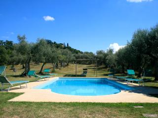 The pool in the olive grove