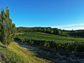 Vineyards of our winery