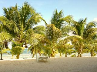 Plentiful Palms on the Beach