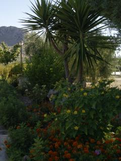 jardin y zona exterior