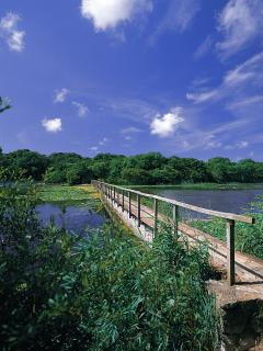 The Lily Ponds at Bosheston
