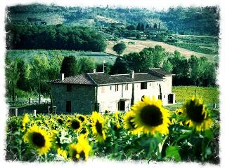 Ornellaia the super Tuscan wine home