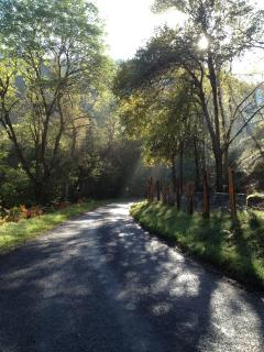 Mist Lifting Off A Local Road