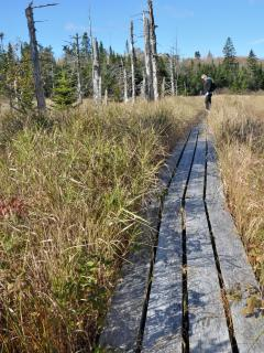 The hike to the yurts is a leisurely 35 minute walk through woods and marshes.