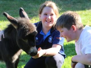 Donkey Tales Farm Cottages - Simpson's Cottage - Maryborough/Talbot
