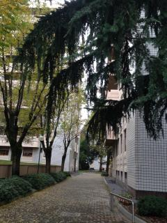 A path in the residential complex.