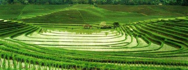 The View is surrounding by the Rice field