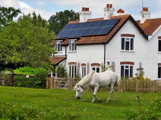Holiday cottage in Burley, heart of the New Forest, Ringwood