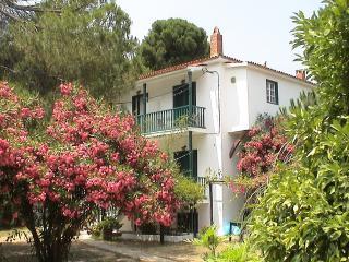 Strophilia Apartments | Koukounaries | Skiathos