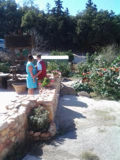 Lunch at the 3000 year old Olive Tree and Museum, Ten Minutes from Robins Nest