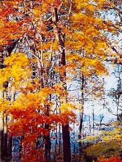 Northwest Michigan's hardwoods provide for beautiful color, come October.