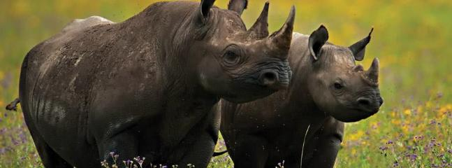 They are found in the Northern Uganda