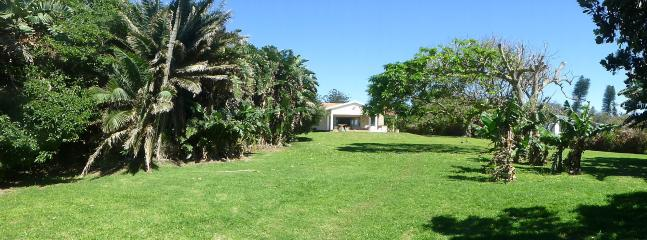 Garden with banana trees