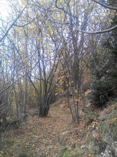 Paseo relajante de otoño