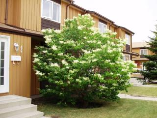 3 bedroom townhouse in southwest Edmonton