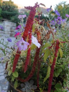Fleurs de l'Enclos dUzès