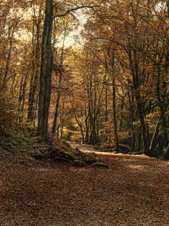 Local Walk by the Sedelle River during autumn (part of the Chemins de St. Jacques De Compostelle)
