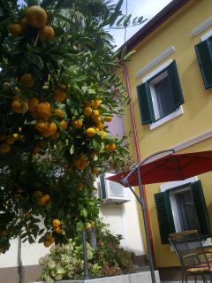 Rental house- fasade-garden view