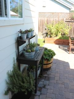 Backyard, herb and succulent garden...berries and vegetables when in season
