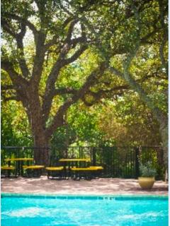 the pool is completely covered with a canopy of Austin Live Oak trees