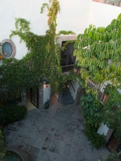 View of vines on walls above courtyard