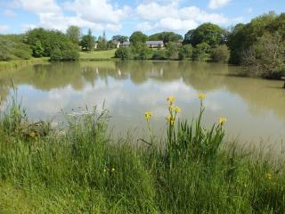 Blagdon Farm - Kestrel, Ashwater