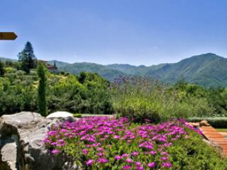 Casine di Rosanna, Glicine