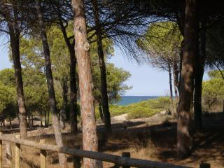 Bajo con terraza de 50m2 cercano a playa de dunas, Guardamar del Segura