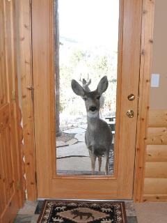 Even the deer want to stay in Awestruck