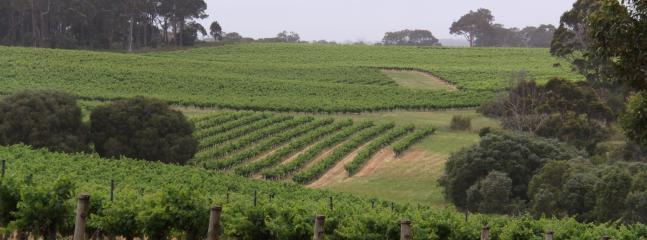 Cape Leeuwin Winery | Margaret River