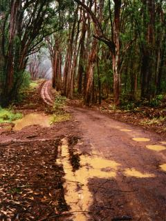 Road up to the Rainforest