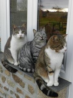 Our three cats, Archie, Minou and closest Moggie. They are very friendly