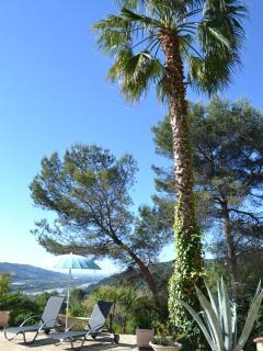 Spike the palm tree
