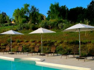 The Olive Grove beyond The Pool