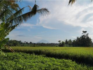 Rice terrace view with mount Agung