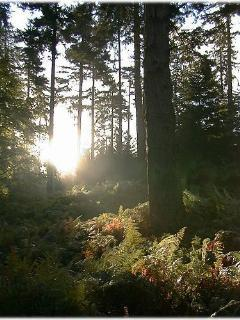 Sunset on Woodland Walk