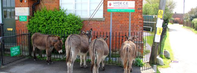 Donkeys going to the village school and the lane we live in.
