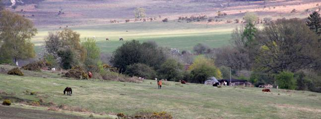 A typical view of horses and deer. Viewed from walks around the village