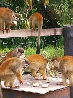 Bunch of Monkeys!!