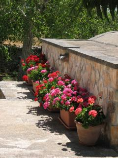 Entance Flowers